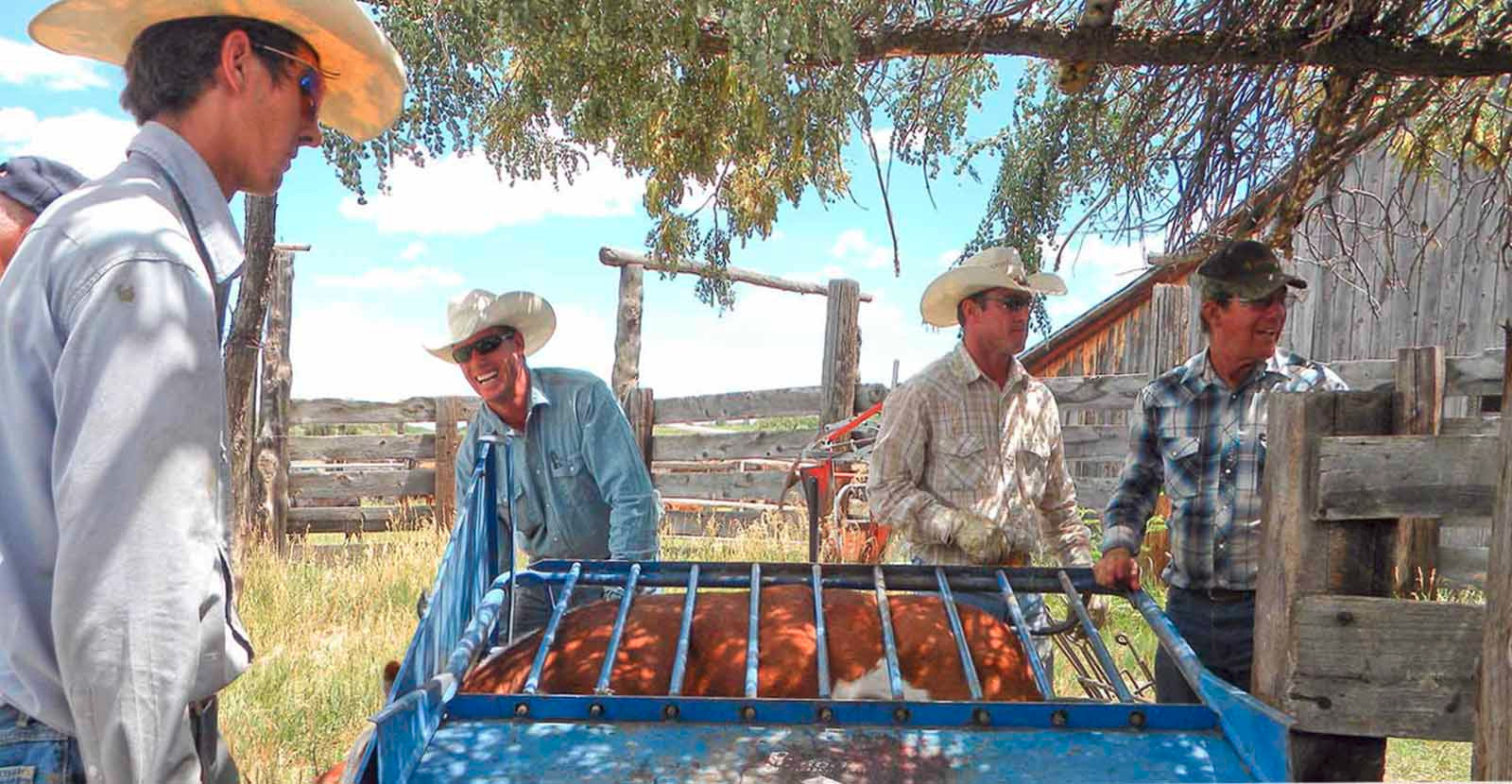 Cattle-&-wildlife,-2012-066