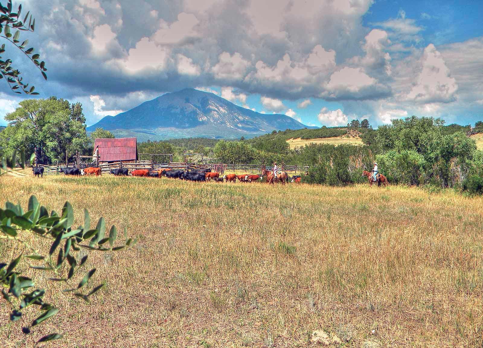 Cattle-&-wildlife,-2012-098_tonemapped
